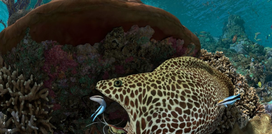 California Academy of Sciences Relies on Qube! Managed GPU Renders for Dazzling Coral Reef Special Effects